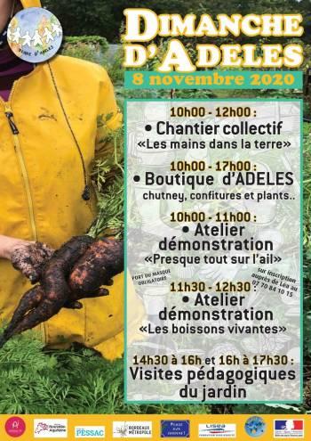 """Affiche du """"Dimanche d'ADELES"""" du 8 novembre 2020 au Jardin d'ADELES"""